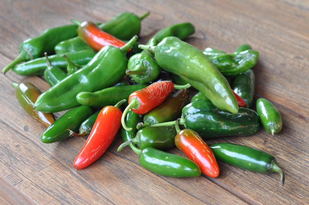 Chilizucht  Chilizucht  – Tipps & Tricks zum Chilianbau-chilizucht-Chilizucht19