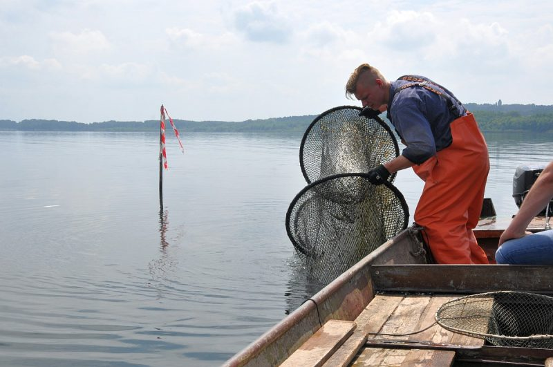 fischerei am wolziger see-Fischerei Wolziger See Blossin 800x531-Fischerei am Wolziger See in Blossin bei Berlin